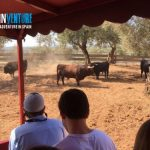 Spainventure bulls fight at Andalusia